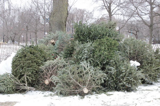 stack your discarded christmas tree at cannon drive and fullerton avenue and get some mulch in - How Old Is Christmas
