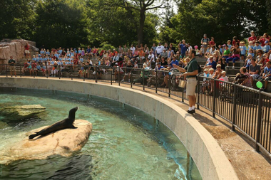 man ticketed for trying to take selfie with seal at lincoln park zoo