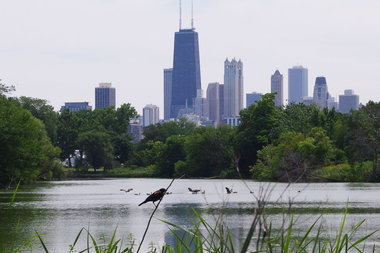 Red-winged blackbirds are common in Chicago