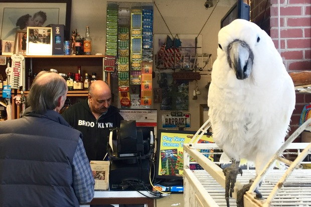 Sasha the cockatoo looks on as Joe Barbari helps a customer at Bel-Port Liquors. After 34 years, Bel-Port Liquors is closing to make way for Bow Truss Coffee Roasters.