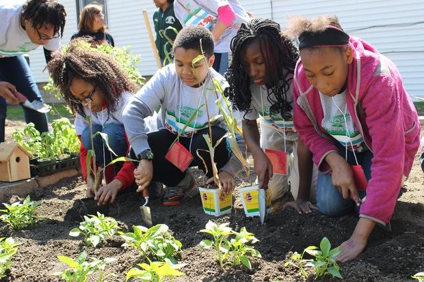 Image result for school gardens high school