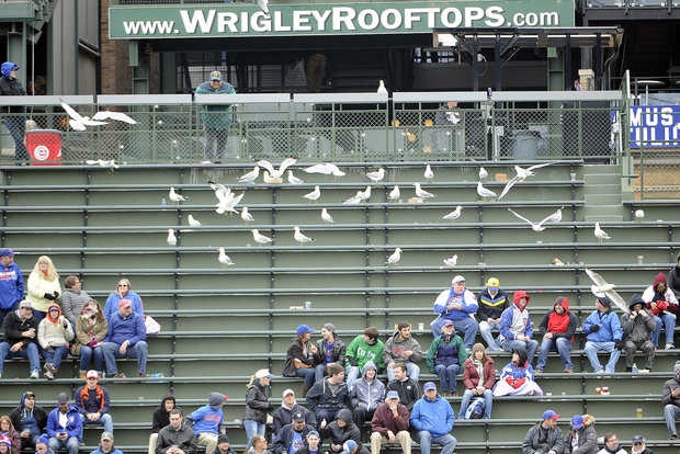 Gulls perch in the bleachers during the seventh inning of a game between the Chicago Cubs and the Milwaukee Brewers on April 28, 2016 at Wrigley Field in Chicago.