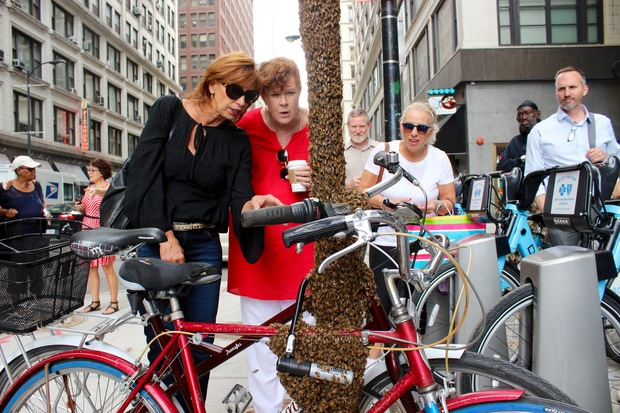 Bees swarmed to a pair of bikes parked off Michigan Avenue and people took pictures.