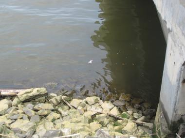 Debris floats in the Hudson River at 135th Street, next to the North River Wastewater Treatment Plant.