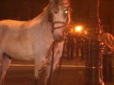 A witness contacted the advocacy group, Friends of Animals, with a picture of the horse seemingly splattered with blood after the July 25 accident.