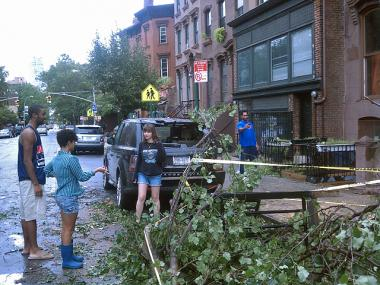 A tree fell into the back of a car on DeKalb Avenue in Brooklyn after Hurricane Irene on August 28, 2011.