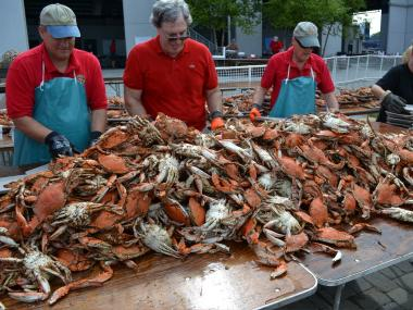 Cooks work on a giant pile of crabs at a crab fest in Annapolis, Maryland.