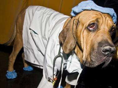 A hound dressed up as a doctor at last year's pet costume contest.