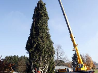 The tree  is a 74-foot high Norway Spruce from the yard of the Keller Family in Mifflinville, Pennsylvania.