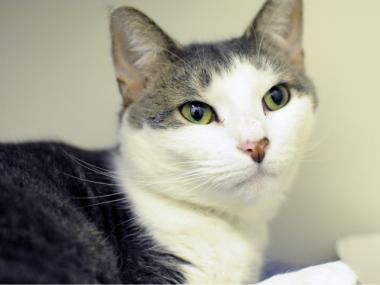 Winona, a 3-year-old domestic shorthair mix, was one of the cuties up for adoption for Cat Friday.