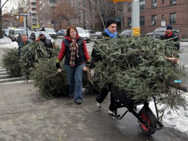 New Yorkers drag their trees to be turned to mulch during MulchFest 2011.