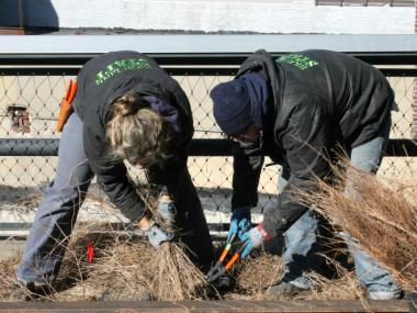 Volunteers trim back plants on the High Line.