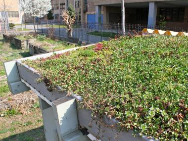 A green roof at the Bronx Guild High School
