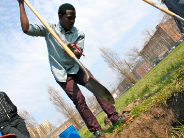 Basilous Falconer, a senior high school students, prepares the soil for the first of 150 fruit trees that will go into the ground.
