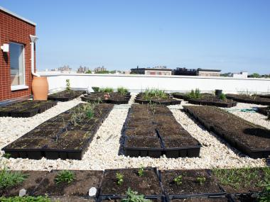 The rooftop garden, a partnership between Georgia's Place and the Crown Heights CSA  (and funded by United Way) helps feed formerly homeless residents while creating a connection to the wider community.
