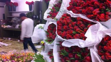 Red tulips piled up for shipment at Associated Cut Flower Co.