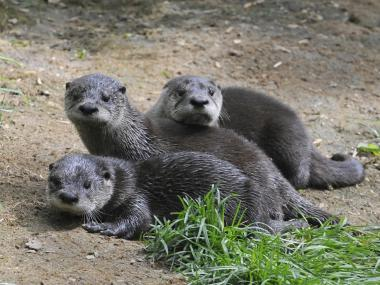 Baby otters were born at Prospect Park Zoo.