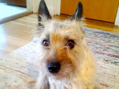 Stevens' 3-year-old terrier, Moose, was adopted by her neighbors after her death.