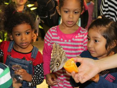 "Exhibit provides a ""mini tropical visit"" as hundreds of butterflies spread their wings."