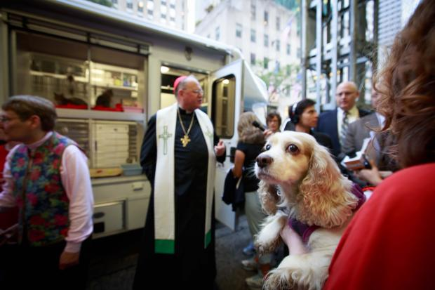 More than two dozen homeless animals and their rescuers filled the front of St. Patrick's Cathedral this morning for the special blessing to mark the annual Feast of St. Francis of Assisi.