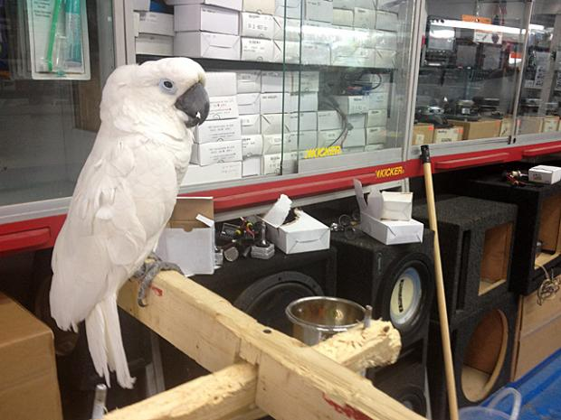 Exotic birds from the JV Pet Shop share space with JV Auto Sound at 248 West Fordham Road in The Bronx.