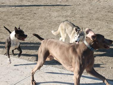 Residents say dog owners abuse rules at J. Hood Wright Dog Run.
