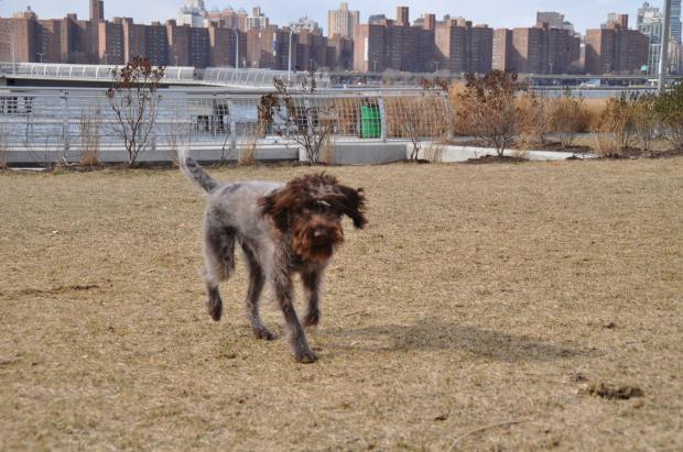 East River State Park's dog run and four other projects won District 33's participatory budgeting vote.
