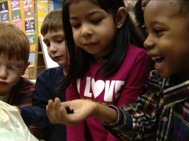 Pre-K students at Park Slope's P.S. 282 get up close and personal with worms during a lesson about composting.