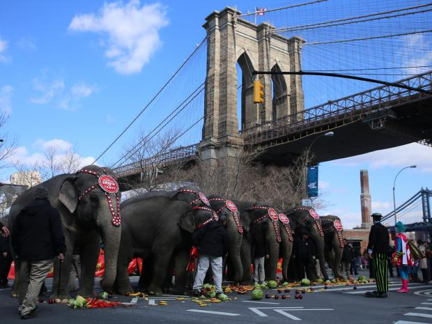 Ringling Bros. and Barnum & Bailey Circus performed a short show under the Brooklyn Bridge to announce their upcoming Barclays Center performances. Animal rights groups protested nearby.