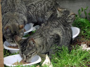Neighborhood Cats will be running workshops on the practice of TNR, or trap, neuter and return.