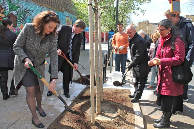 The Greening Western Queens Initiative will plant 70 trees in Sunnyside and Woodside this fall.
