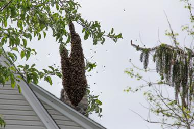 Police responded to a nearly 15,000 swarm that was near a school in Great Kills.
