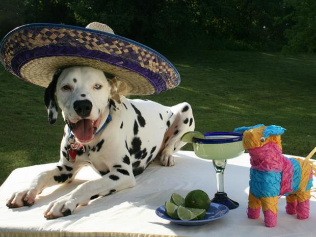 The Cinco de Mayo party will be held at Doggie-Do & Playtime Too on East 76th Street.