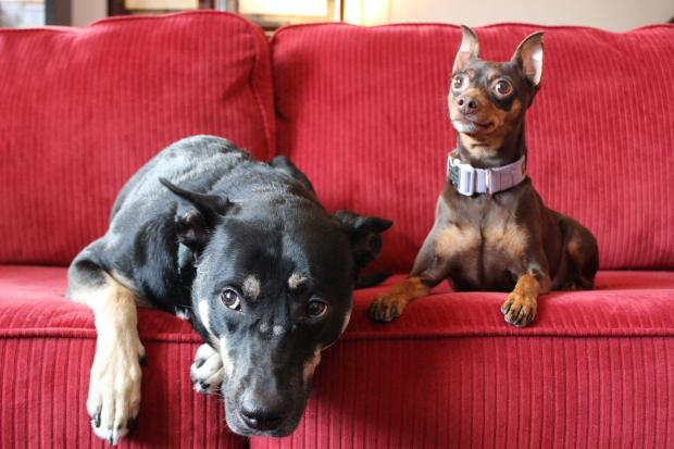 Zoe and Lani are two dogs living in Carroll Gardens.
