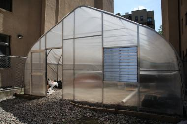 Harlem Grown planted its first seedlings for microgreens in its new greenhouse on Friday, which it will harvest and sell to local restaurants.