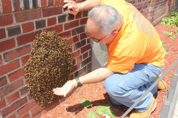 NYPD bee expert vaccumed up 15,000 bees Satruday afternoon.