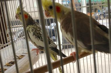 Paradise Bird Shop is shuttering as soon as the owner sells all the animals in the store.