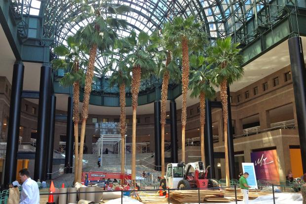 Brookfield Place's Winter Garden in Battery Park City is having its palm trees replaced with new ones.
