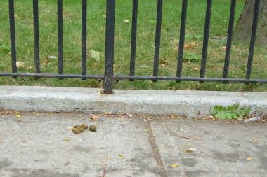 A photo snapped by Queensbridge Houses tenant Ray Normandeau, who's hosting a dog poop photo contest.