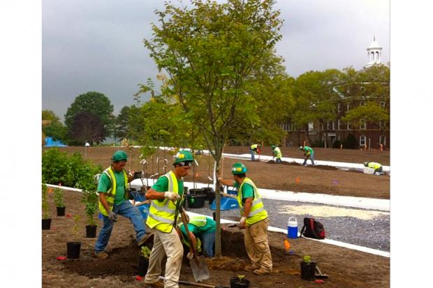 Governors Island Hammock Grove had its first tree planted on Aug. 28 2013