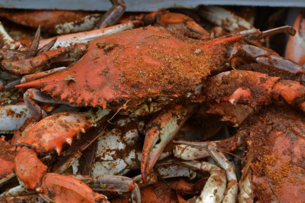 The Hammer and Claws crabfest returns to Chelsea for a third year in September.