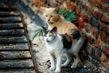 Two cats from a feral colony in New York City that is under the supervision of Neighborhood Cats.
