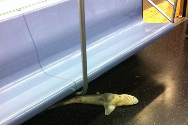 A dead shark rode the rails to Queenboro Plaza.