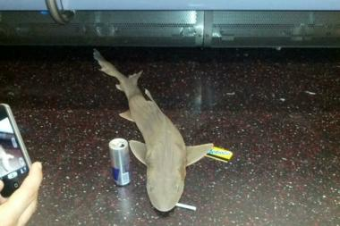 An enthusiastic passenger outfitted the shark with props he had on hand: a cigarette, a Red Bull can, and a Metrocard.