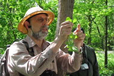 During the tour this Saturday participants will learn about edible plants in Forest Park.