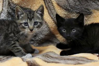 Two kittens resuced from the Church Avenue B and Q station in Brooklyn were named Arthur and August after being rescued Thursday.