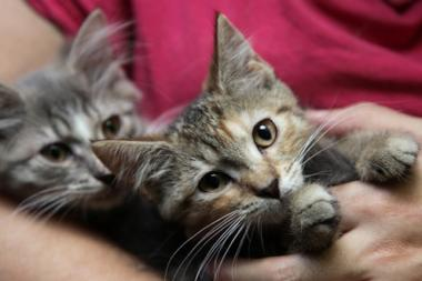 You'll soon be able to pick up supplies for your kittens — and all your other animals — at a new Petco store in Jackson Heights.