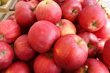 There's an apple for every purpose at the city's greenmarkets.