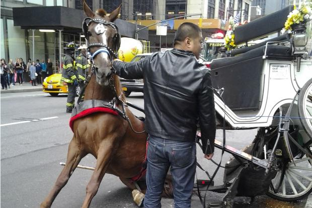 A horse-drawn carriage was involved in an accident, witnesses said.
