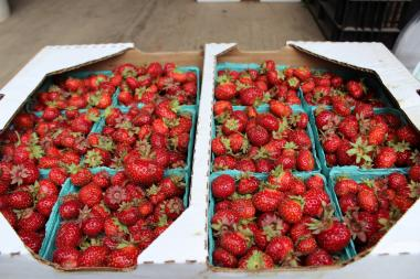 """They call them Tristars,"" said Blue Hill's chef Trevor Kunk said about the strawberries sold at the Union Square Greenmarket's Berried Treasures Farm. ""What's magical about it is that, because of where they're situated in the Hudson Valley, they're able to grow them three out of the four seasons. They're super tiny, but super delicious."""